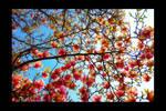 Spring ....magnolia..