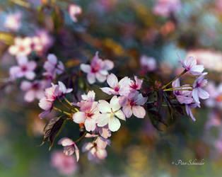 Spring detail(V). by Phototubby