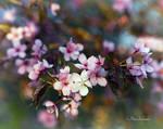 Spring detail(V).