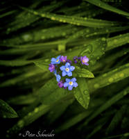 Rainy day (IV). by Phototubby