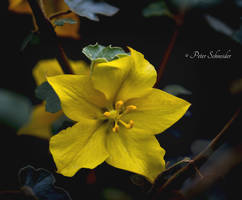 Beauty yellow. by Phototubby