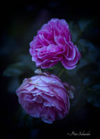 My garden a place for inspiration. by Phototubby