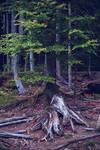 September in bavarian forest.