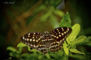 Magic wings(III). by Phototubby