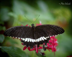 Magic wings (IV). by Phototubby
