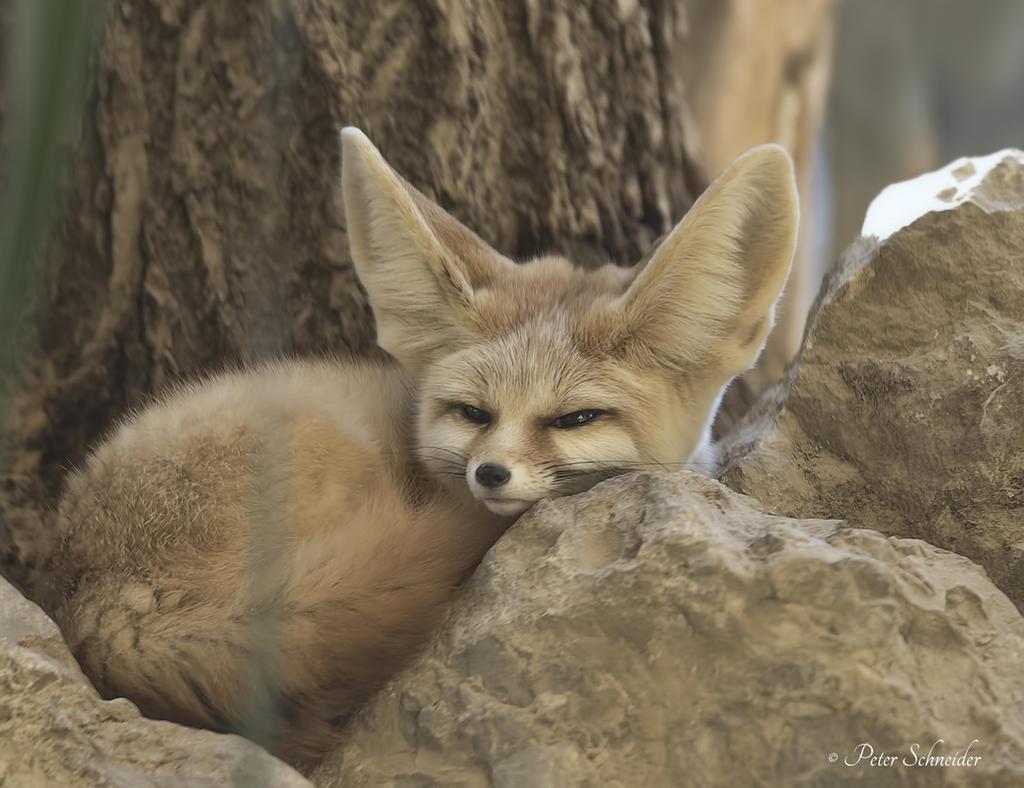 Sleepily. by Phototubby