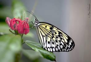 Tender beauty (VIII). by Phototubby