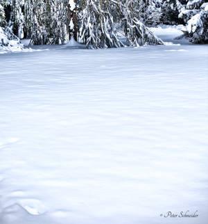 Snow. by Phototubby