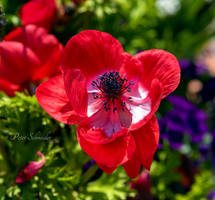 Spring: red. by Phototubby