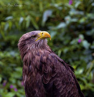 Keen observer. by Phototubby