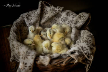 A basket full of beautiful noise. by Phototubby