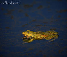 Le frog. by Phototubby