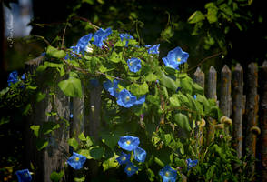Country blue. by Phototubby
