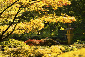 The golden garden. by Phototubby
