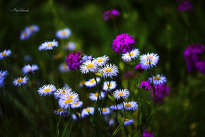 Summer meadow. by Phototubby