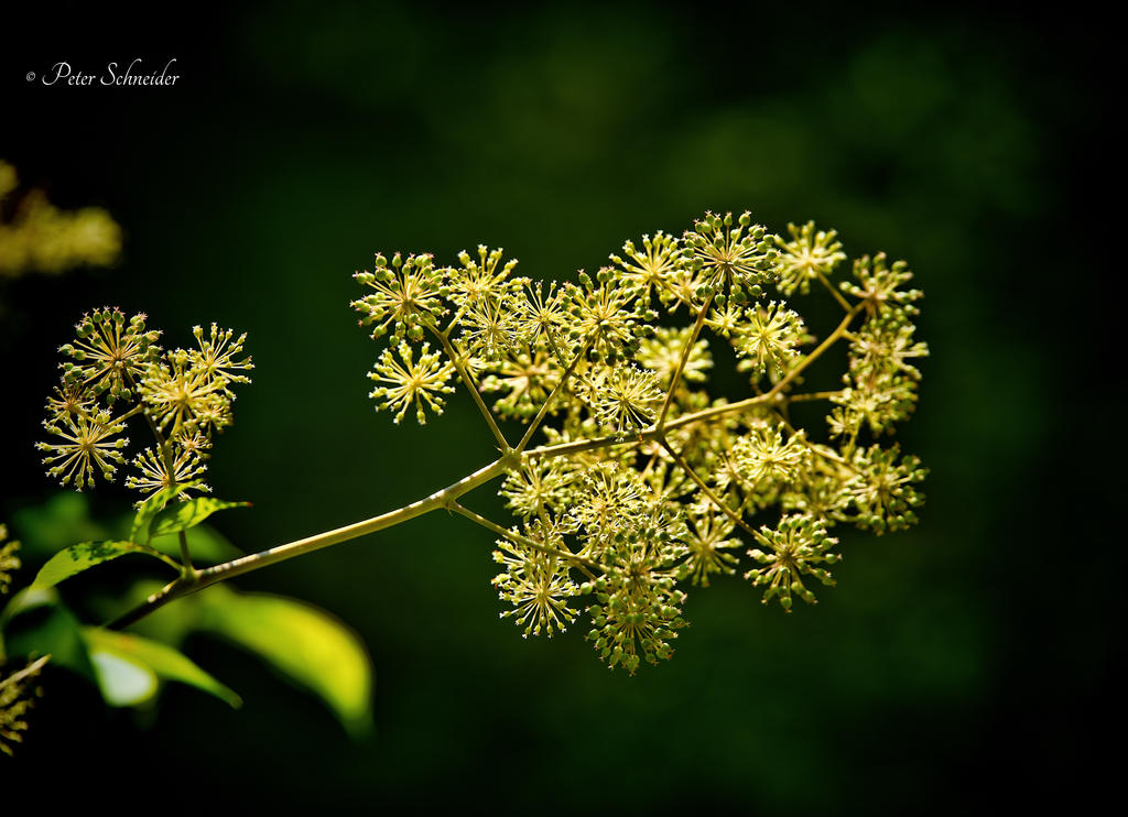 Summer breeze. by Phototubby