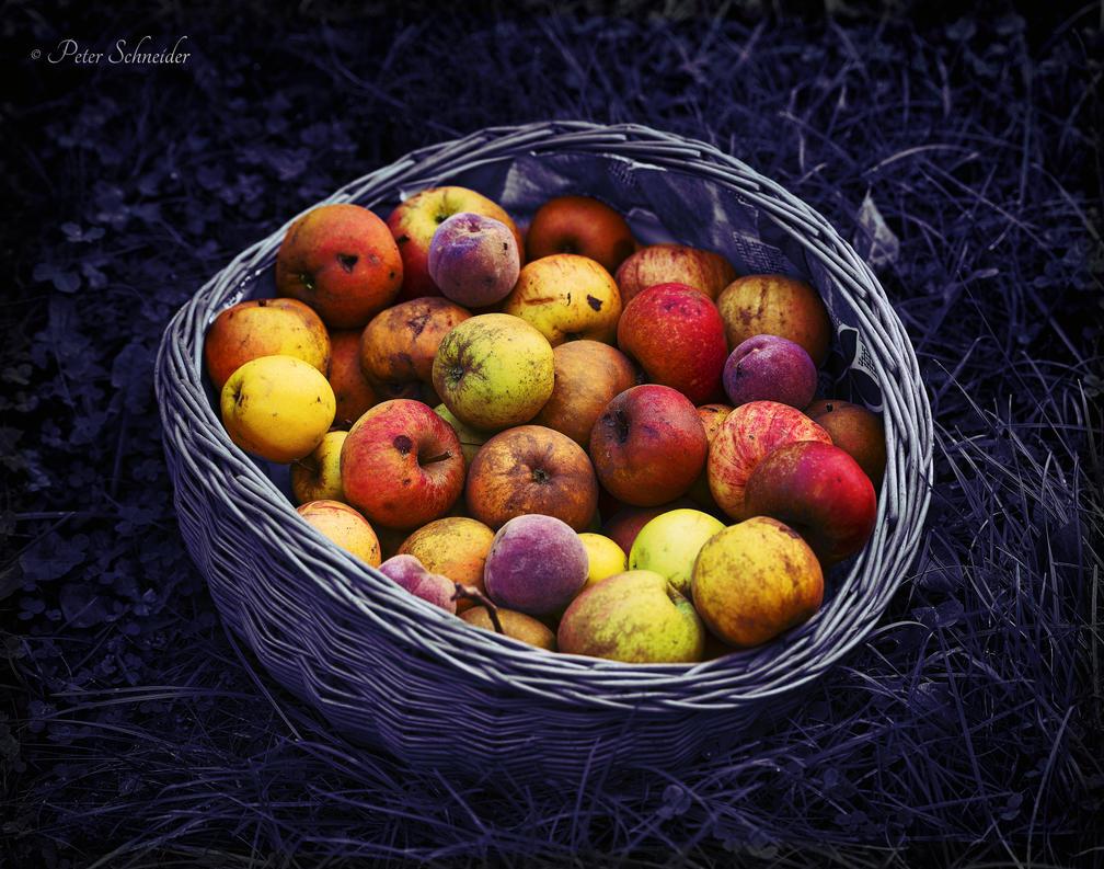 Autumn. by Phototubby