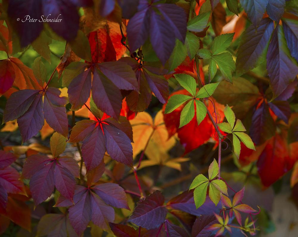 Autumn(II). by Phototubby