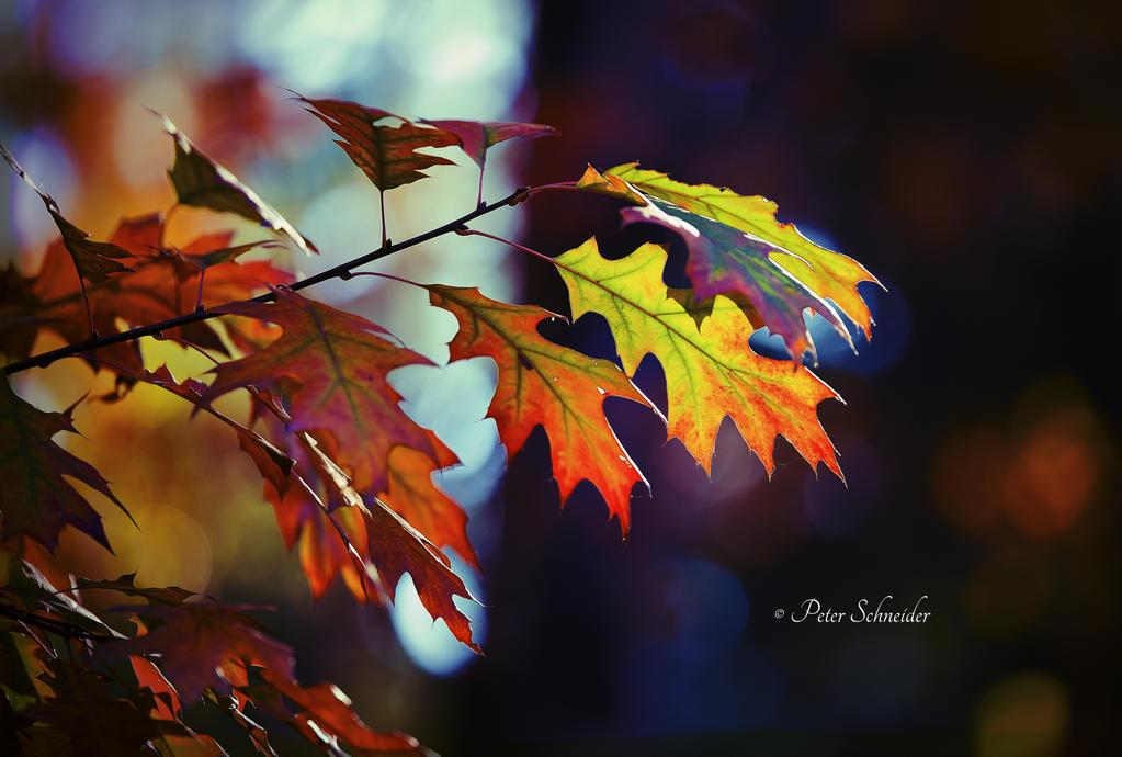 Autumn (III). by Phototubby