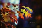 Autumn (III).