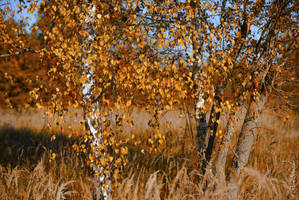 Autumnal whisper. by Phototubby