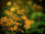 Autumn (VII).