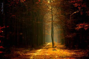 Through the golden autumn. by Phototubby