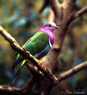 Colorful feather. by Phototubby