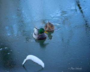 Together through the frost. by Phototubby