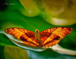 Resting wings. by Phototubby
