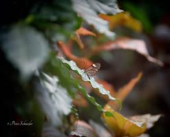 Precious: by Phototubby