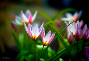 Time for spring (II). by Phototubby