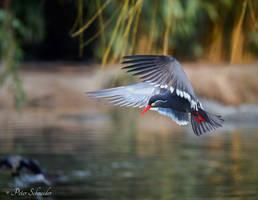 Fishing (II). by Phototubby
