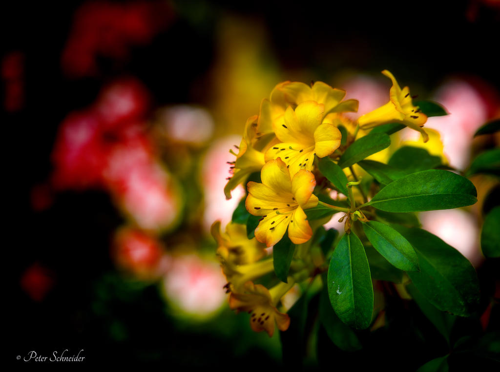 Yellow are the colour of the..... by Phototubby