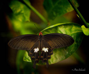 Resting beauty. by Phototubby