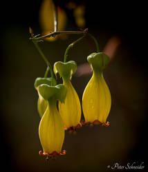 Yellow (III). by Phototubby