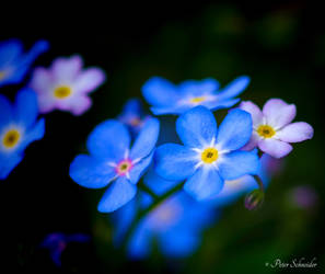 Kind of blue. by Phototubby