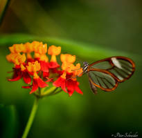 Transparent. by Phototubby