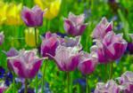 Spring coloris.