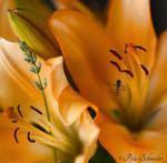 Colours in my garden (III). by Phototubby