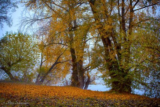 In morning autumn sun.
