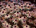 Floral pattern (III).