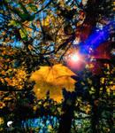 Autumnlight.