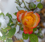 December bloom(II).