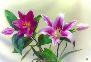 Lilies (II).