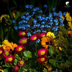 Spring:flowerpower (II).