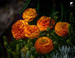Spring orange.