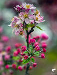 Spring pastel. by Phototubby