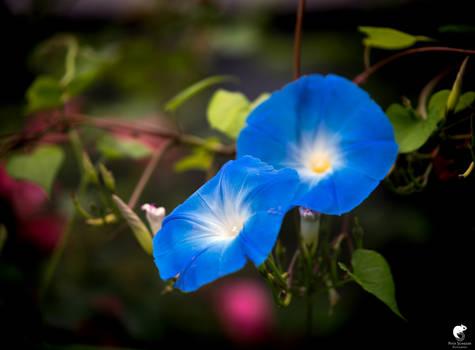 September blue(II).