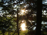 Sunlight Break